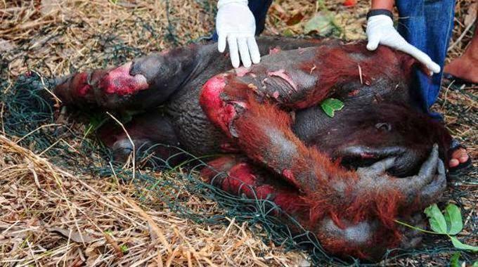 Effetti dell' olio di palma sulla Fauna